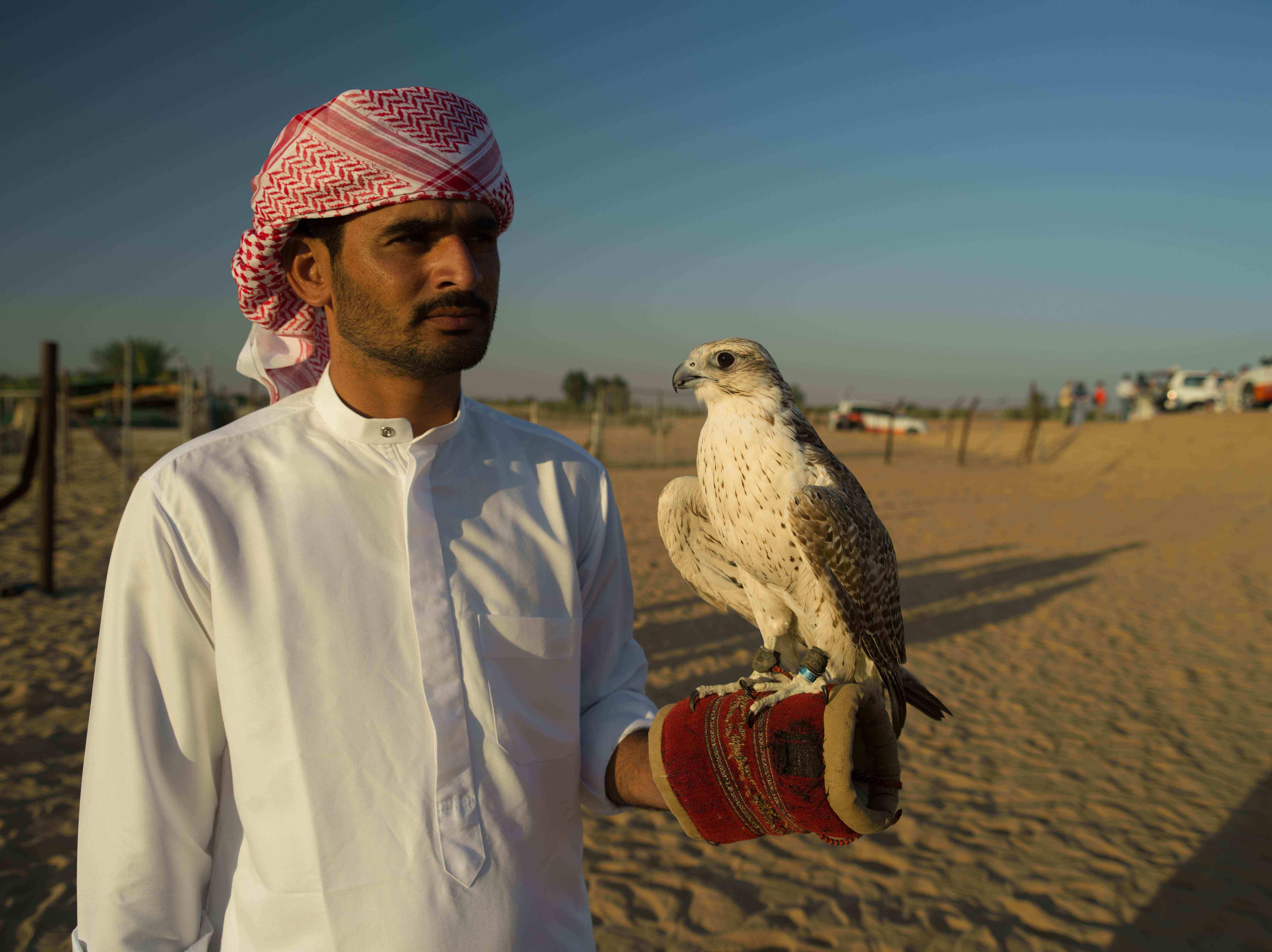 Bedouin Falconry