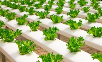 A 2.0 farm to grow vegetables in the Arabian desert