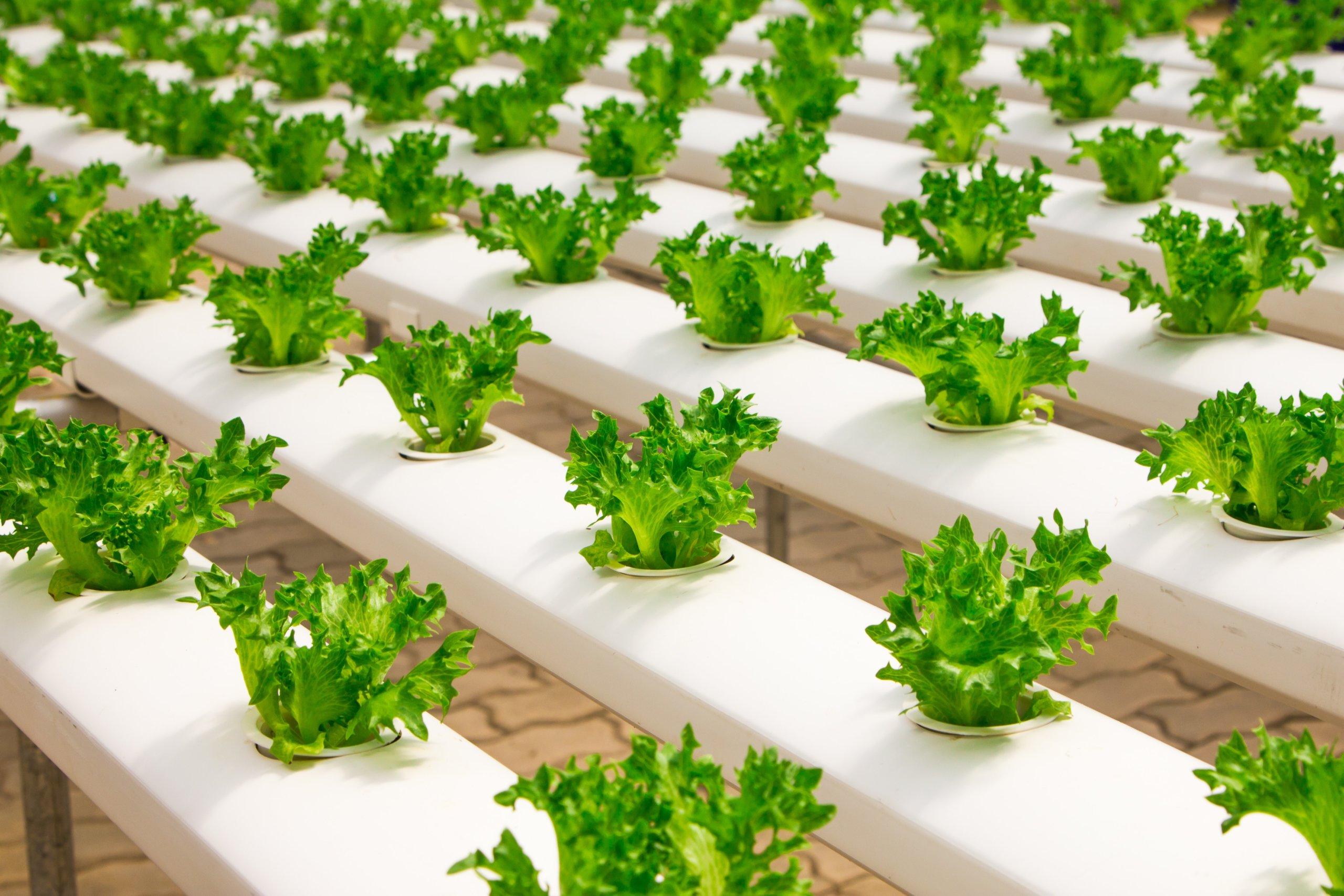 La technologie offre de nouvelles opportunités à l'agriculture dans le désert
